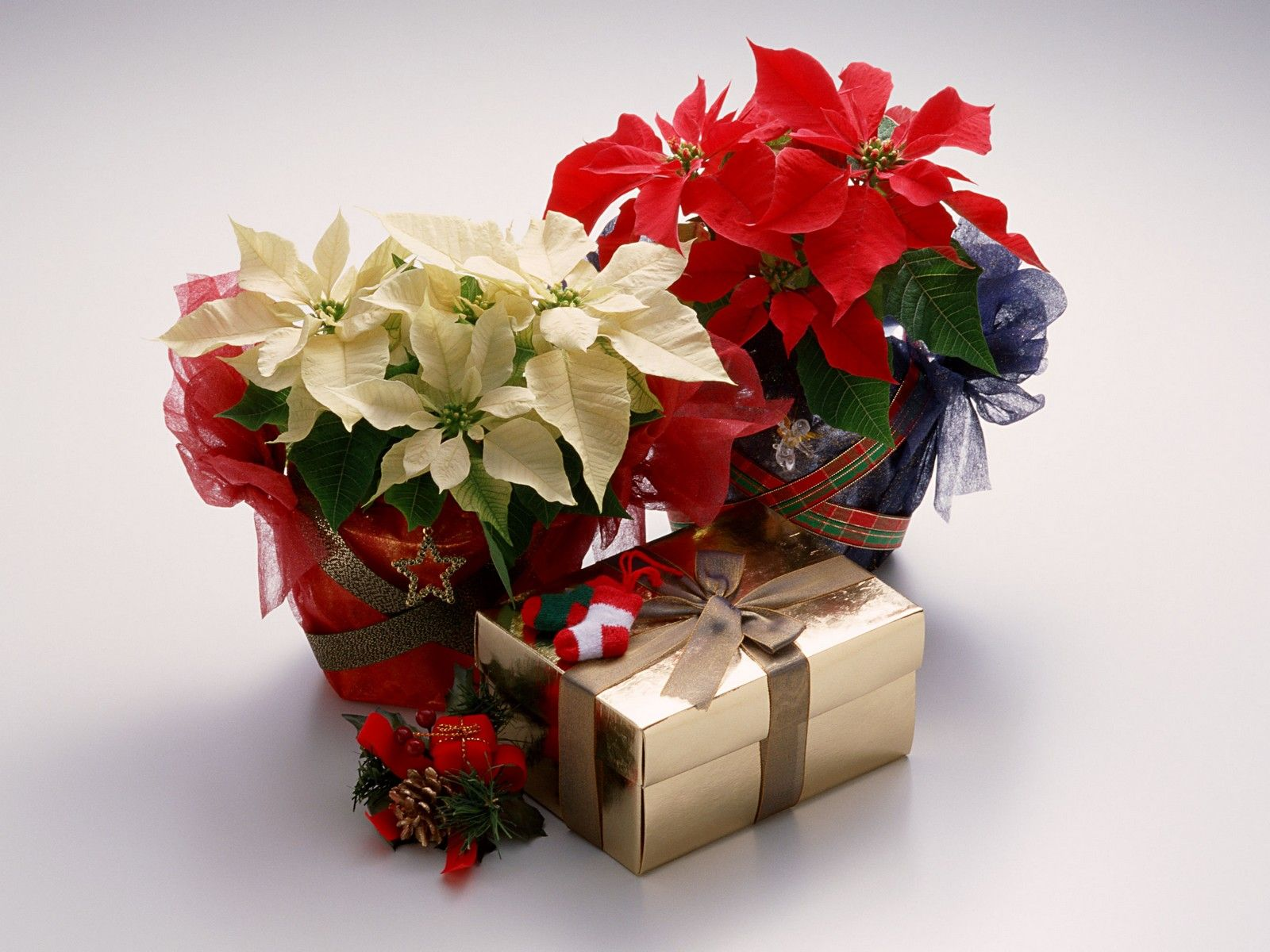 pinterest searching it is always better to give the gifts of flowers on the holiday seasons and even on special occasions the flower delivery singapore that you send or give izmirmasajfo