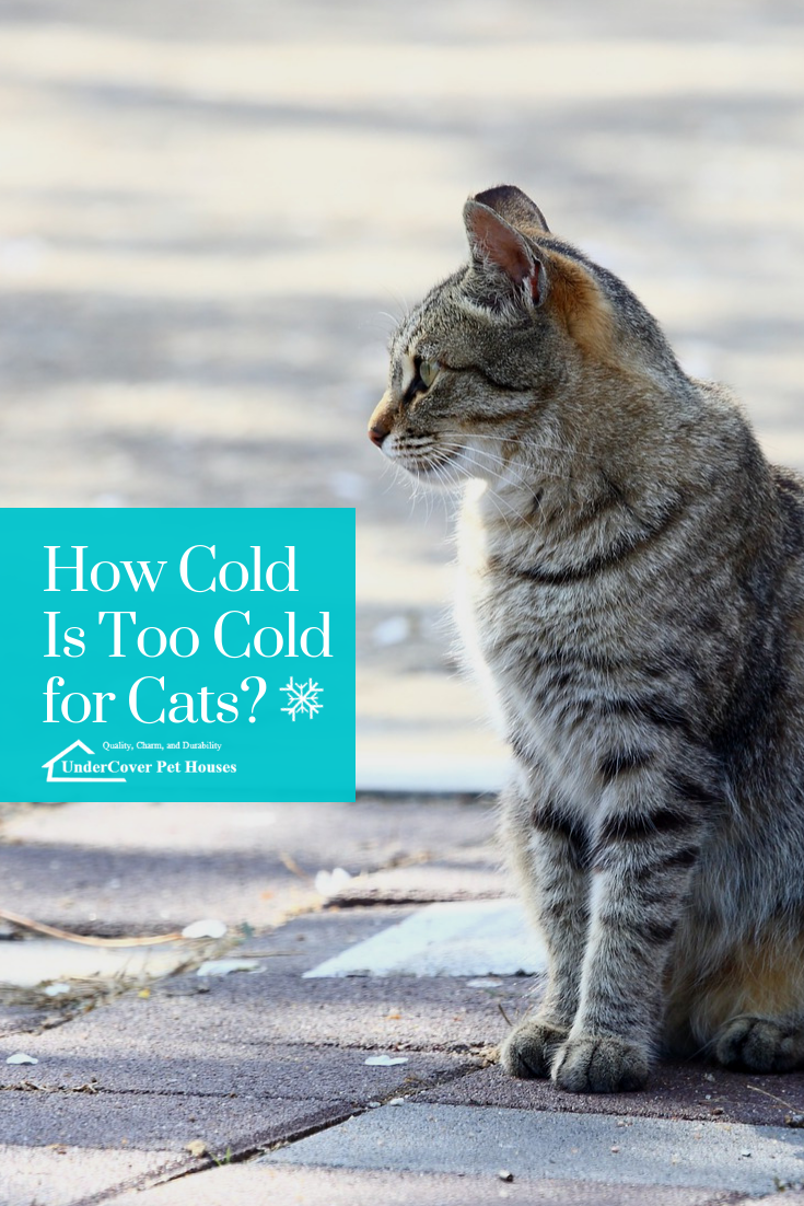 How Cold Is Too Cold for Cats Cats, Indoor pets, Warm bed