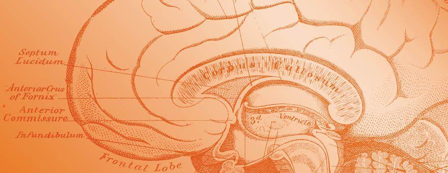 Clinical Psychology PsyD Program - Adler University - Chicago, IL