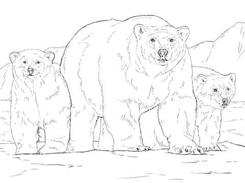 Белый медведь с двумя медвежатами Раскраска | animal coloring ...