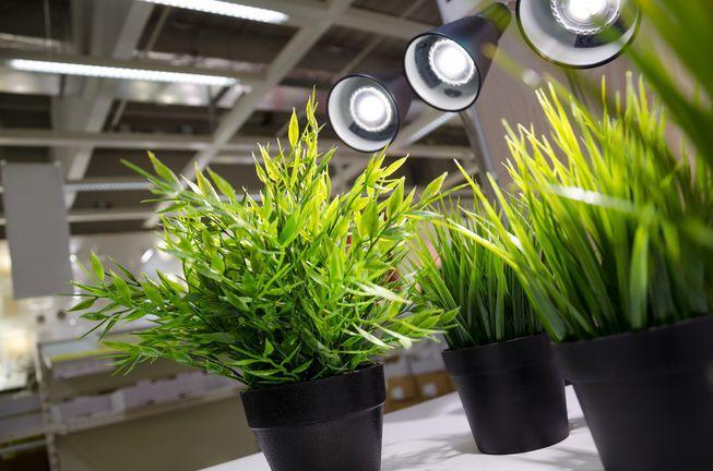 Grow Lights 101 Help Your Indoor Plants Thrive Indoor 400 x 300
