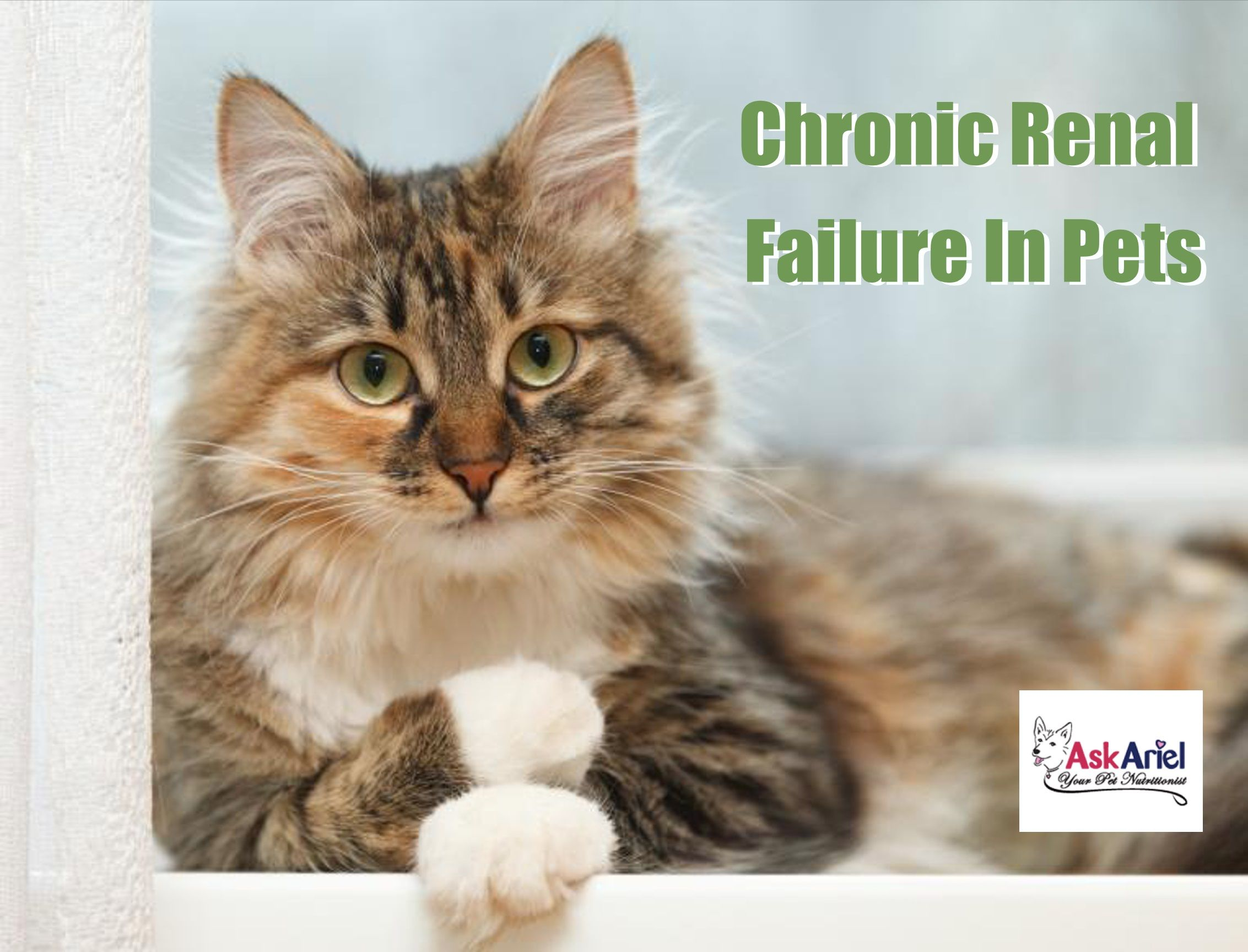 Natural Kidney Supplements for Dogs & Cats Ask Ariel