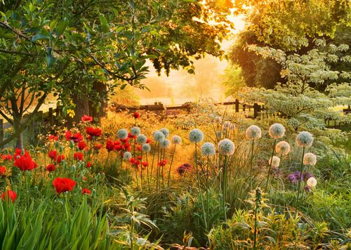 Beautiful hidden flower garden, with sunrise glowing beyond the trees. - DdO:) - http://www.pinterest.com/DianaDeeOsborne/flowers-beyond-expected/ - Lovely peaceful place to rest looks like an art museum landscape painting.