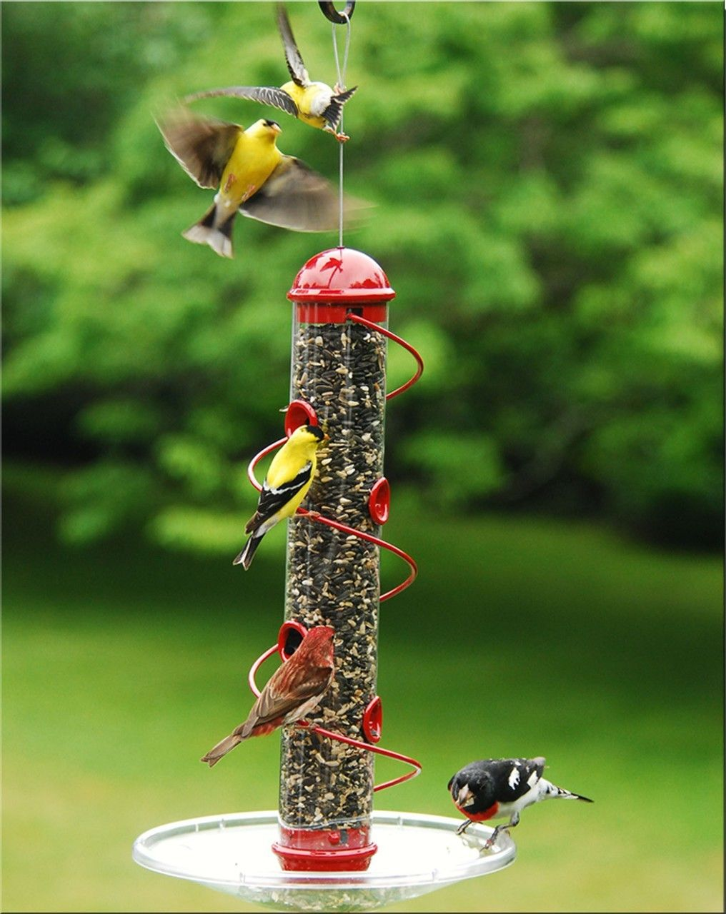awesome clingers only feeder bird seed feeders bird feeders awesome clingers only feeder bird seed feeders bird 755
