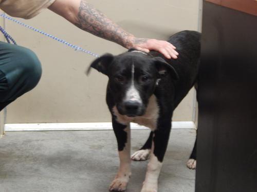 I Found Titus On Animal Shelter Animals Adoption