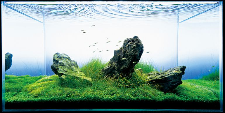 An Aquatic Rock Garden By Takashi Amano Nature Aquarium Aquascape Takashi Amano
