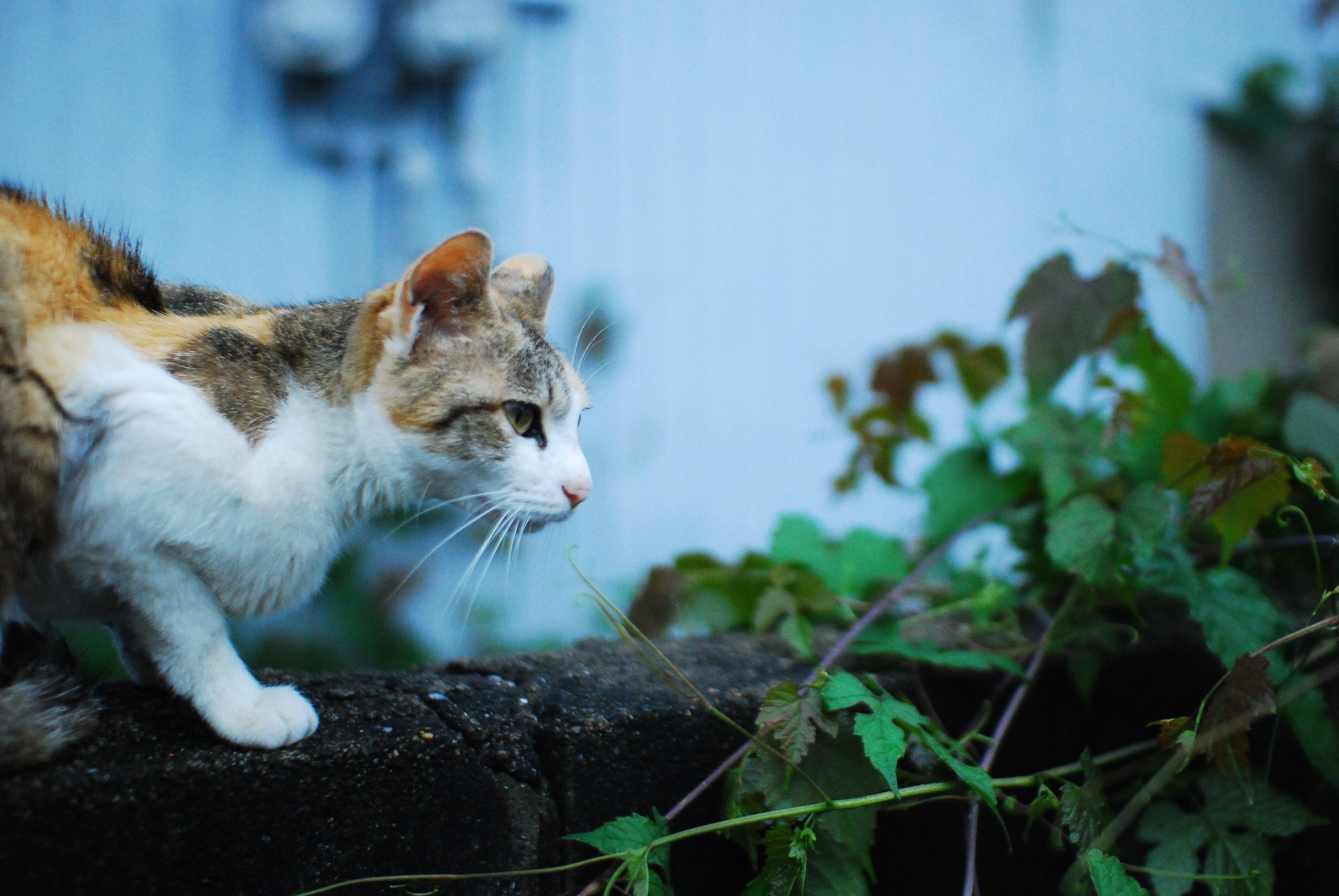 かわいい猫のデスクトップ壁紙画像まとめ フルhd 1920x1080 Pc 猫