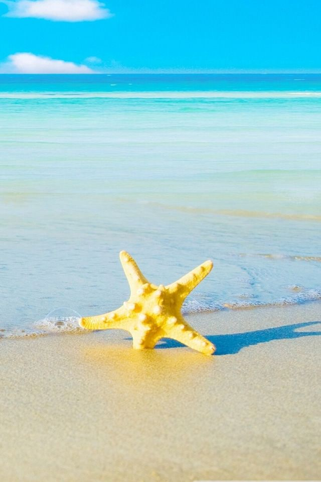 Starfish On The Beach Iphone 4s Wallpapers Wallpaper Iphone