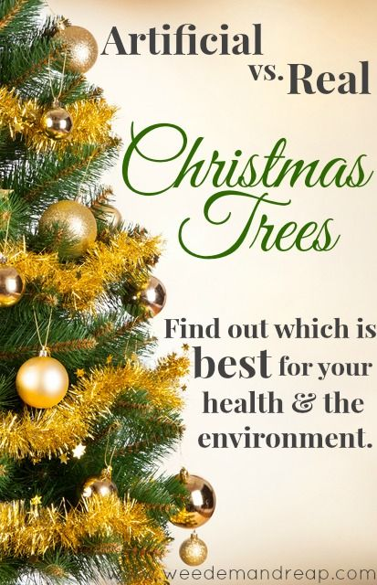 Artificial Vs Real Christmas Trees Find Out Which Is Best Real Christmas Tree Christmas Tree Natural Christmas