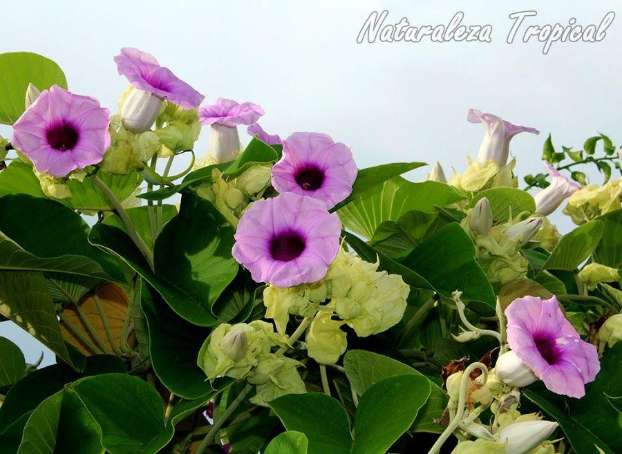 Las Mejores Y Mas Populares Plantas Para Jardines Espectaculares