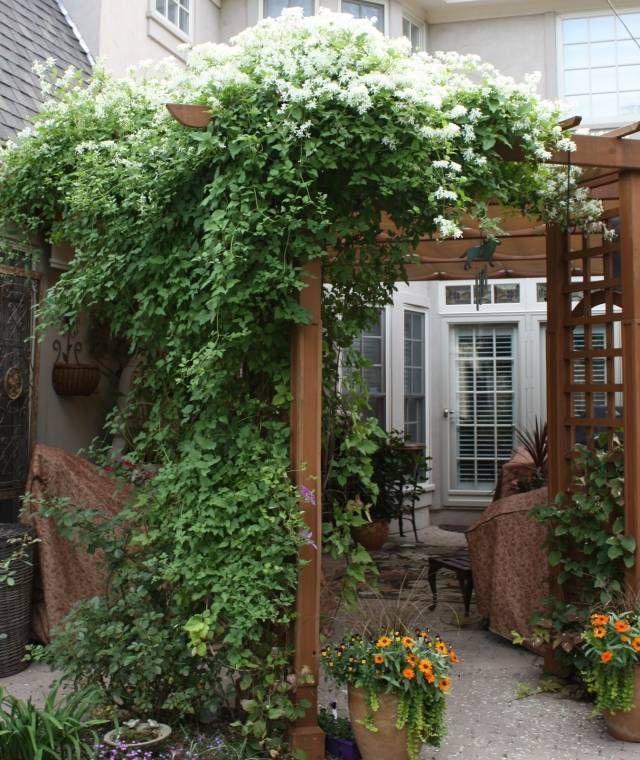 clematis tipps pflegen sweet autumn sorte wei pergola garten kletterpflanzen pinterest. Black Bedroom Furniture Sets. Home Design Ideas