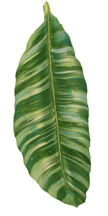 Image Result For Tropical Leaves Transparent Png