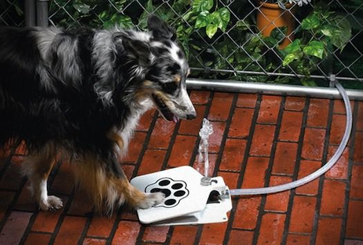 doggiefountain_1    http://www.livbit.com/article/2012/04/13/doggie-fountain-provides-relief-to-your-beloved-pets-on-hot-summer-days/