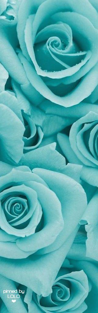 Turquesa Flores Cosas Azules Color Azul Turquesa