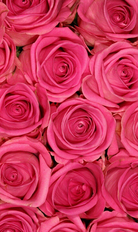 Pretty in pink | Aesthetic roses, Rose wallpaper