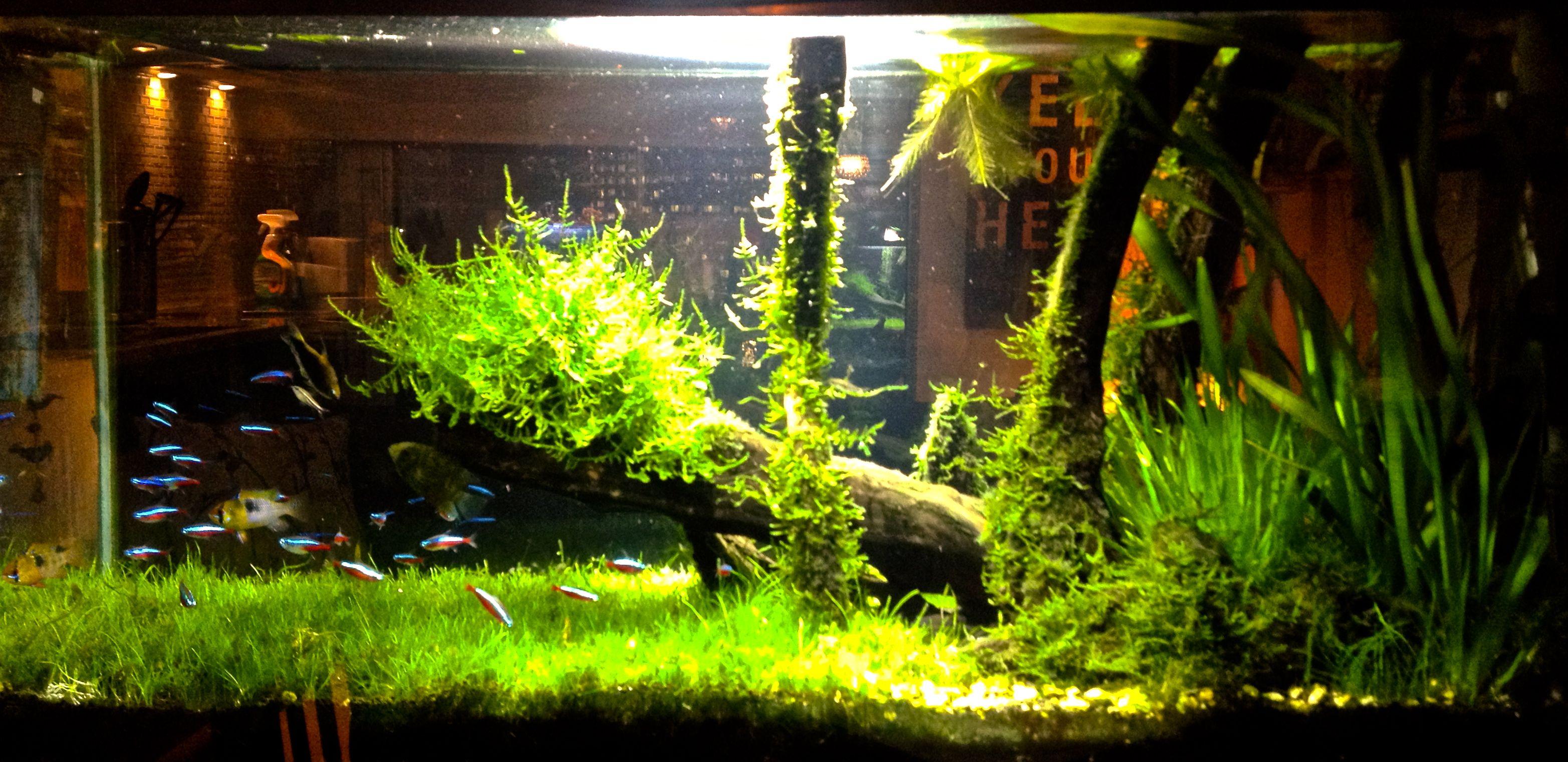 Fish for amazon aquarium - Night Time Shot Of My 30 Gallon Amazon Planted Tank Set Up Fish Aquariumsaquarium