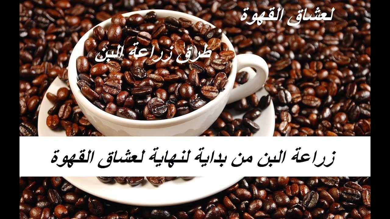 زراعة البن لعشاق القهوة خطوة بخطوة Coffea حلقة 357 Food Breakfast Cereal