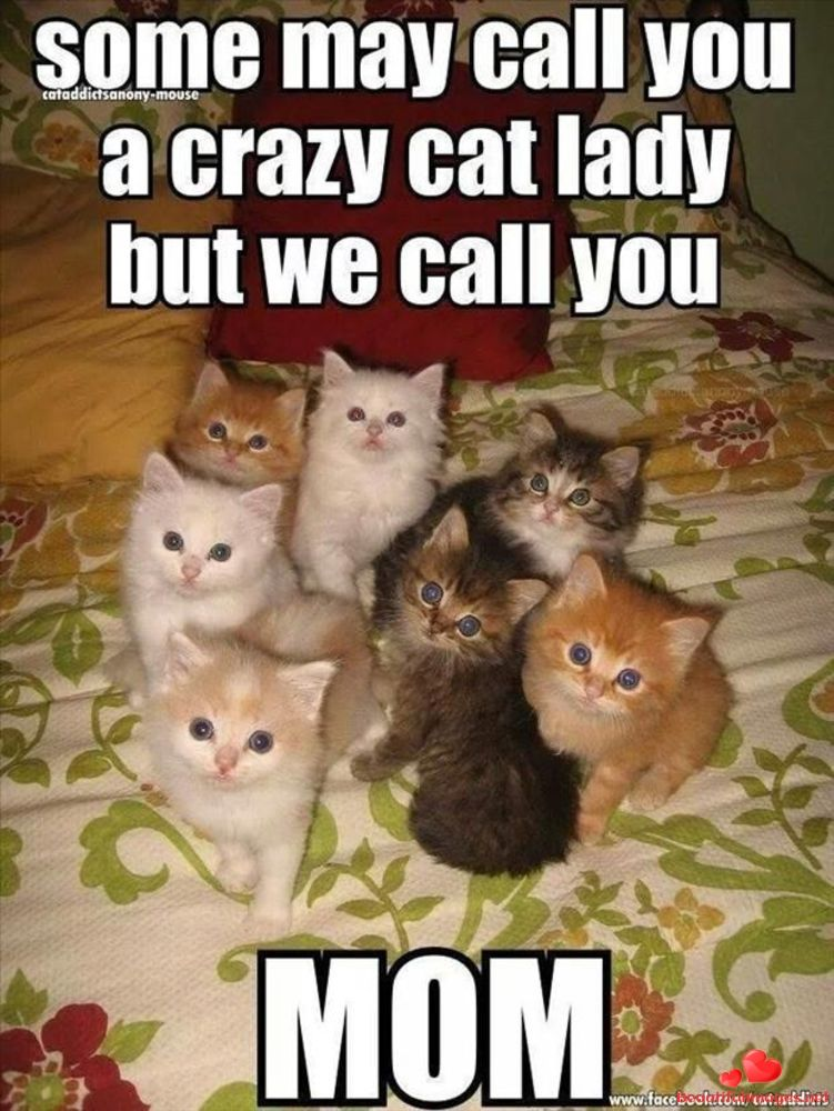 Download For Free Nice Funny Quotes For Facebook And Whatsapp Share To Your Friends Beautiful Images Funny Cute Cats Funny Animal Pictures Funny Animal Memes