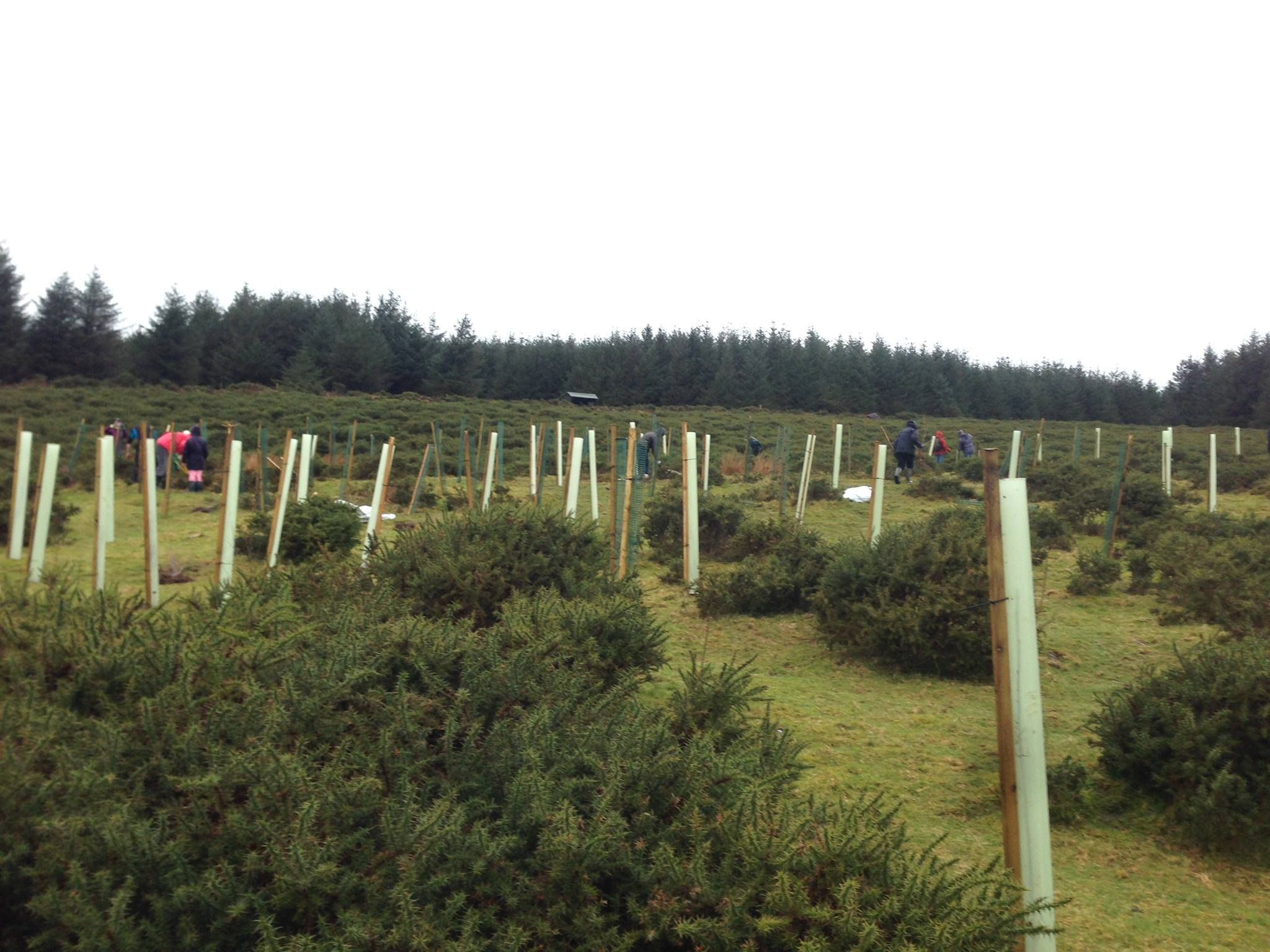 Garden trees for screening  Volunteers putting tree guards on our young trees Interested in