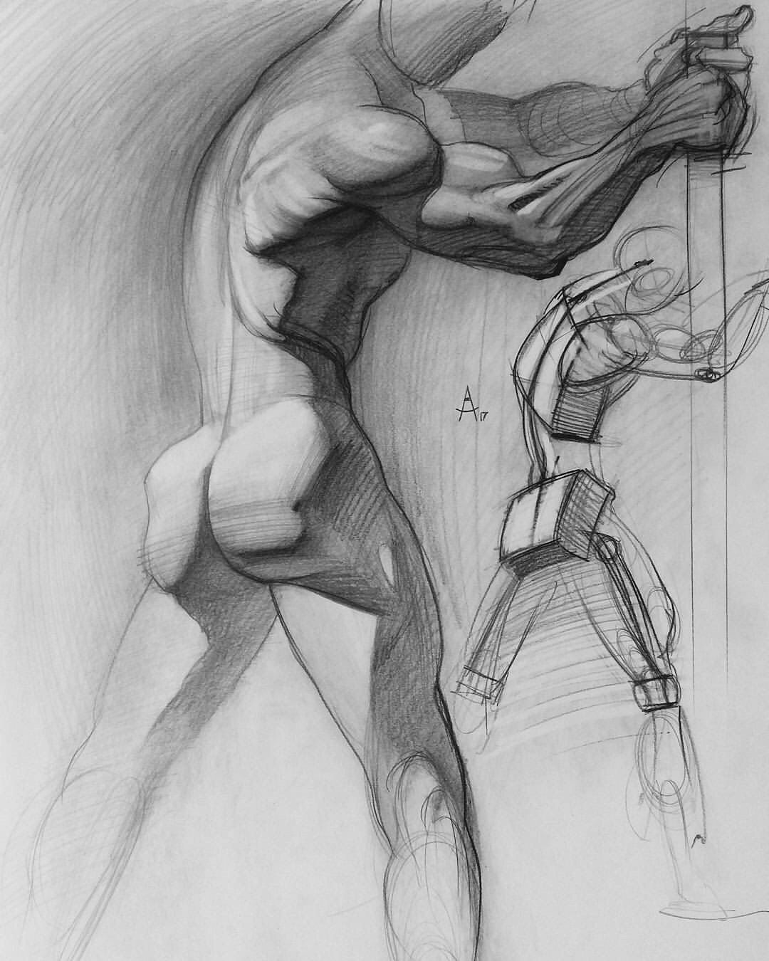 Anatomy Pinterest Drawings Anatomy Drawing And Sketches