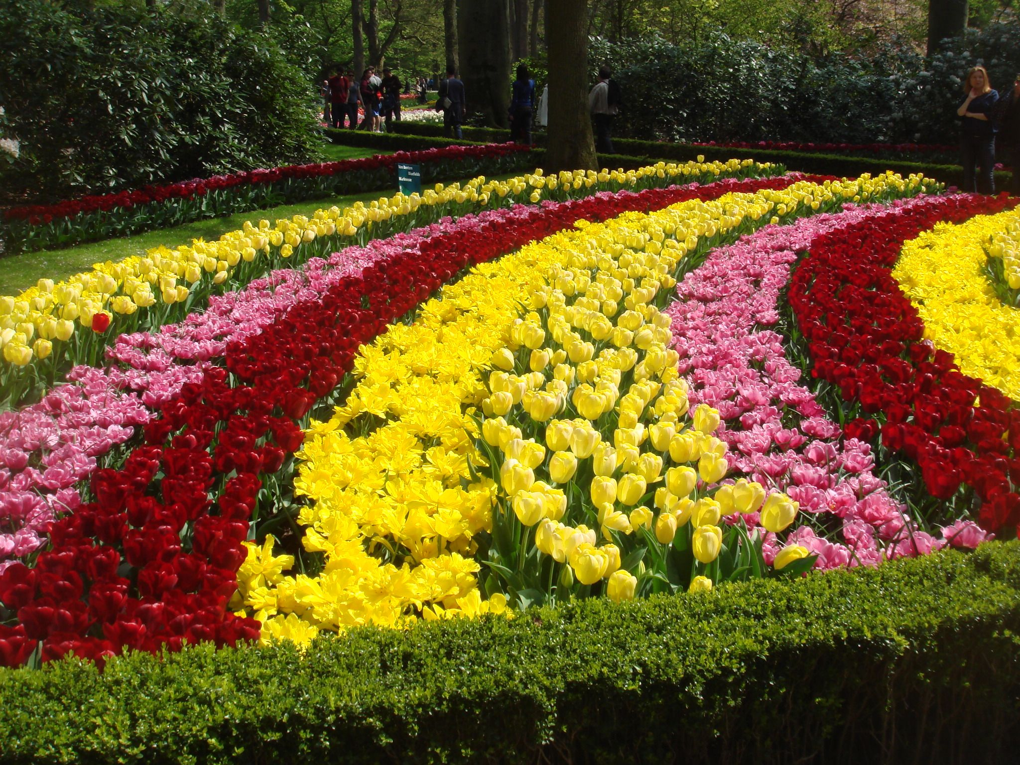A Festival of Tulips