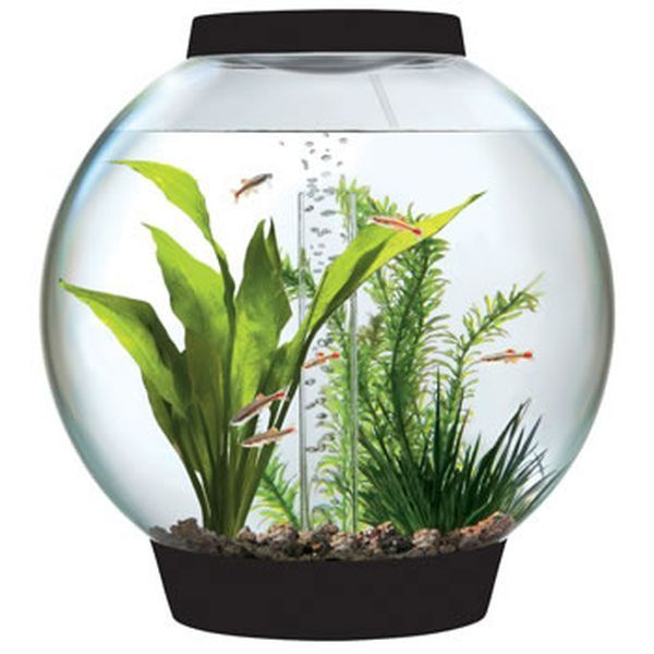 Genial BiOrbs Tabletop Aquarium