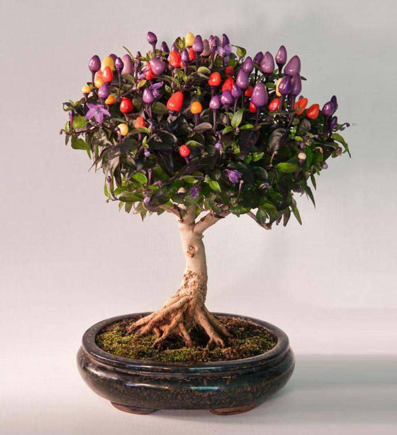 bonsai baum kaufen und richtig pflegen - einige wertvolle tipps, Garten und Bauten