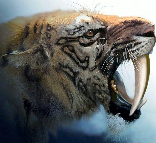 Smilodon - A saber-toothed cat (alternatively spelled ...
