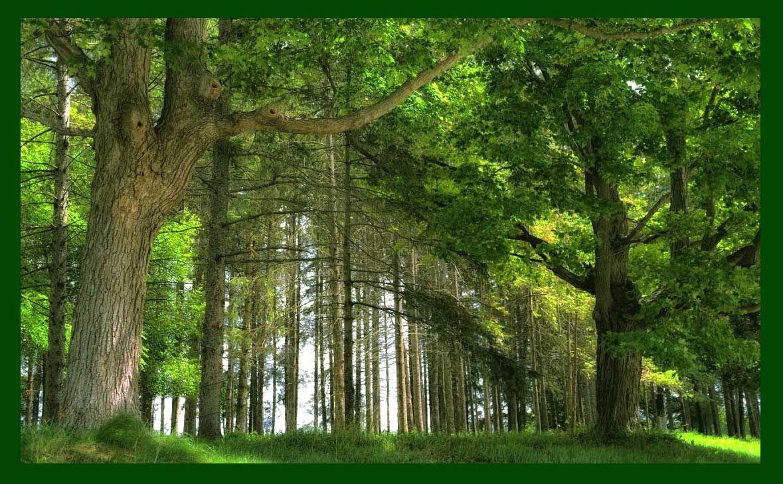 Gambar Pemandangan Hutan Ideas For The House Pinterest