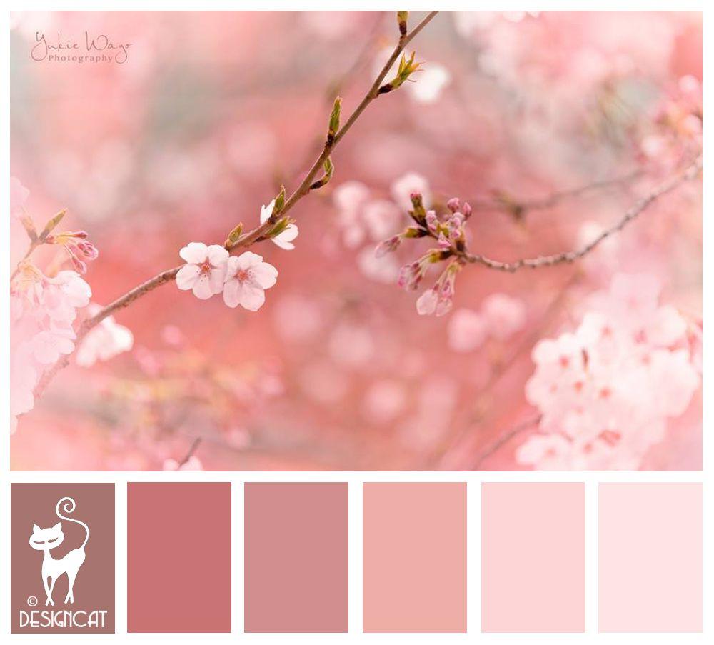 Cherry Blossom Pink Blush Dusky Rose Designcat Colour Inspiration Board Cherry Blossom Bedroom Cherry Blossom Wedding Theme Wedding Theme Color Schemes