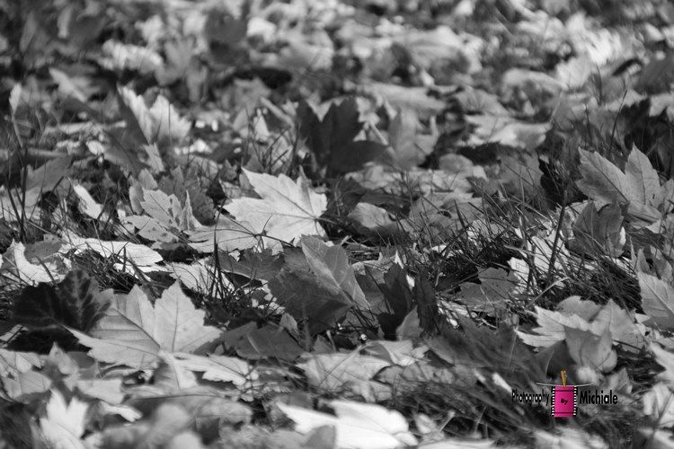 Autumn Leaves in bw