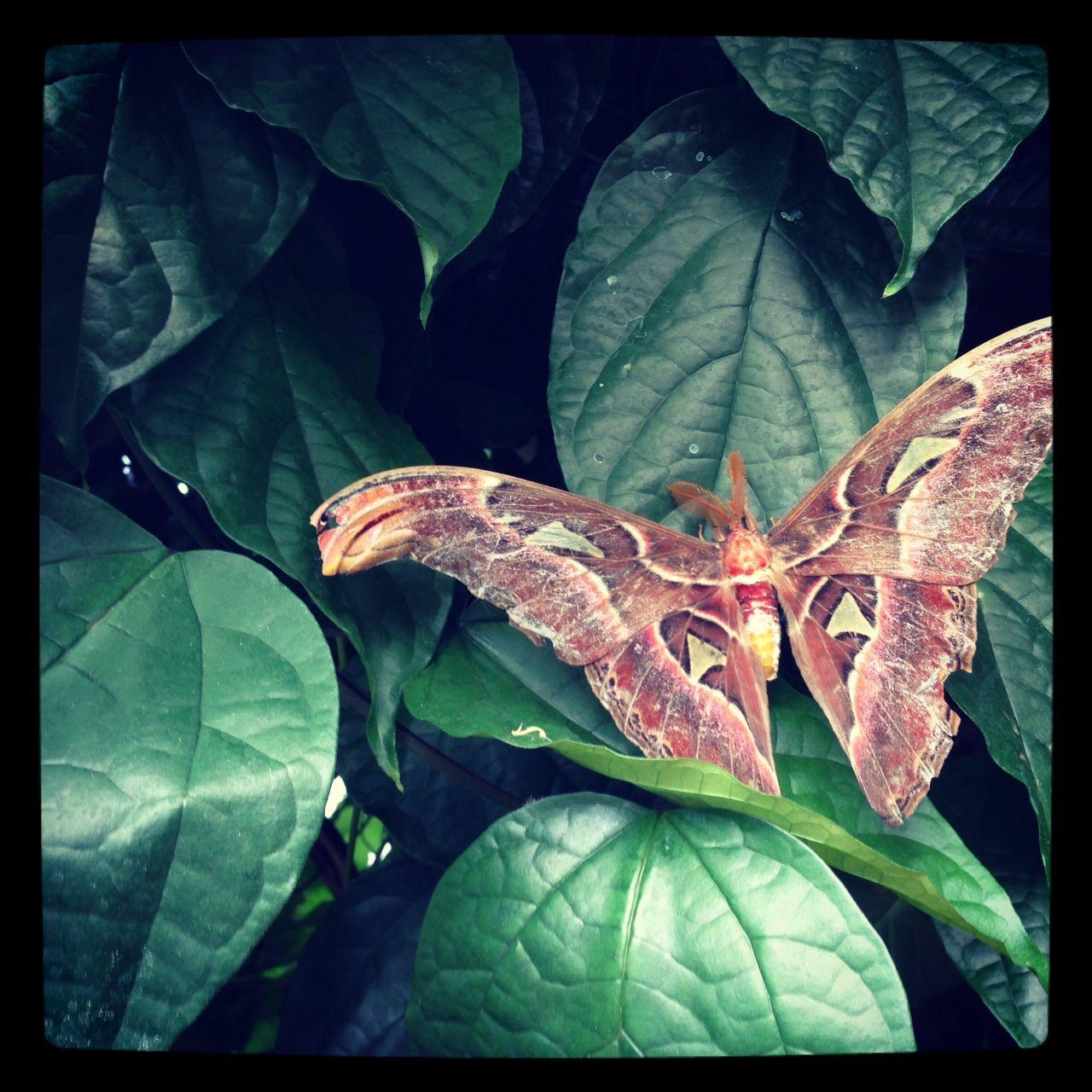 Beautiful Moth In London Zoo