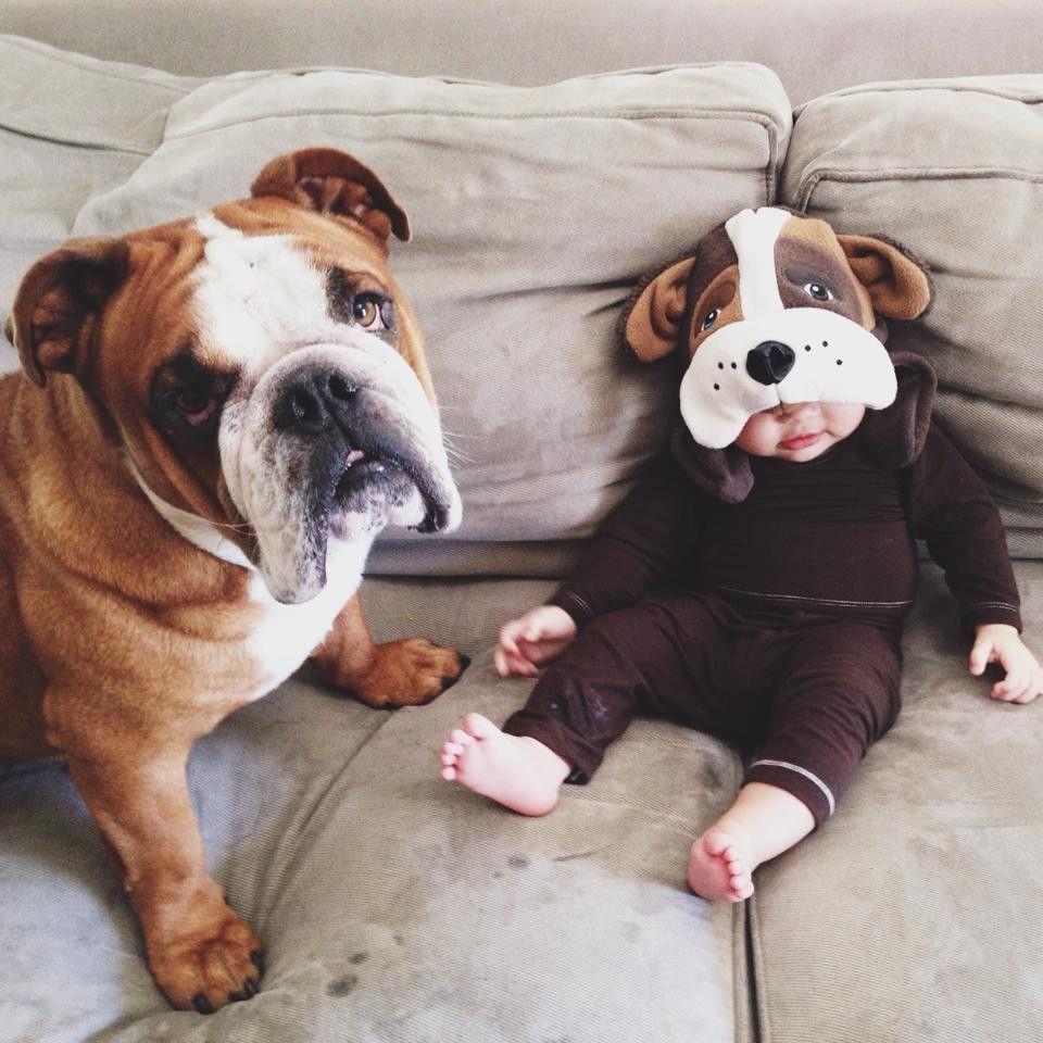 Bulldog6 Perros Bulldog Perros Y Bebes Perros Pug