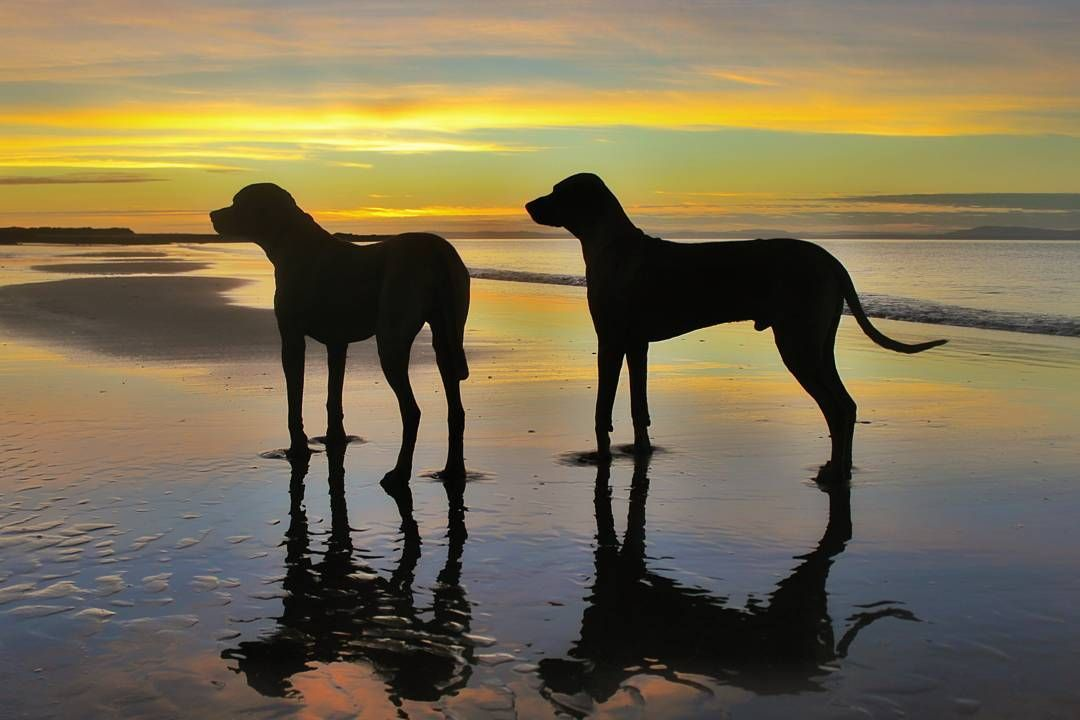 Sunset shared with my Ridgebacks.... perfect end to a day....