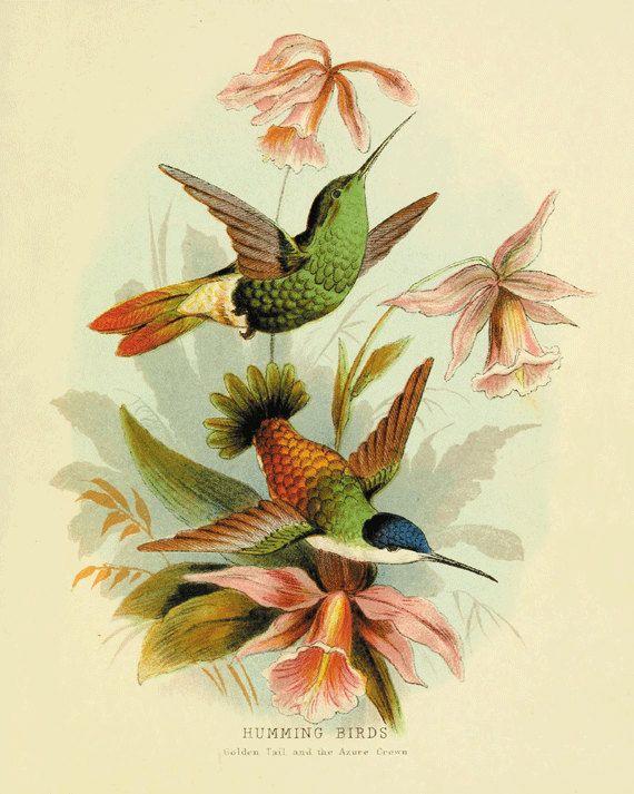 Hummingbirds wall decor Bird art print Antique wall art nature wall ...