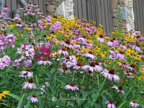 17 Best 1000 images about English Gardens and Wildflowers on Pinterest