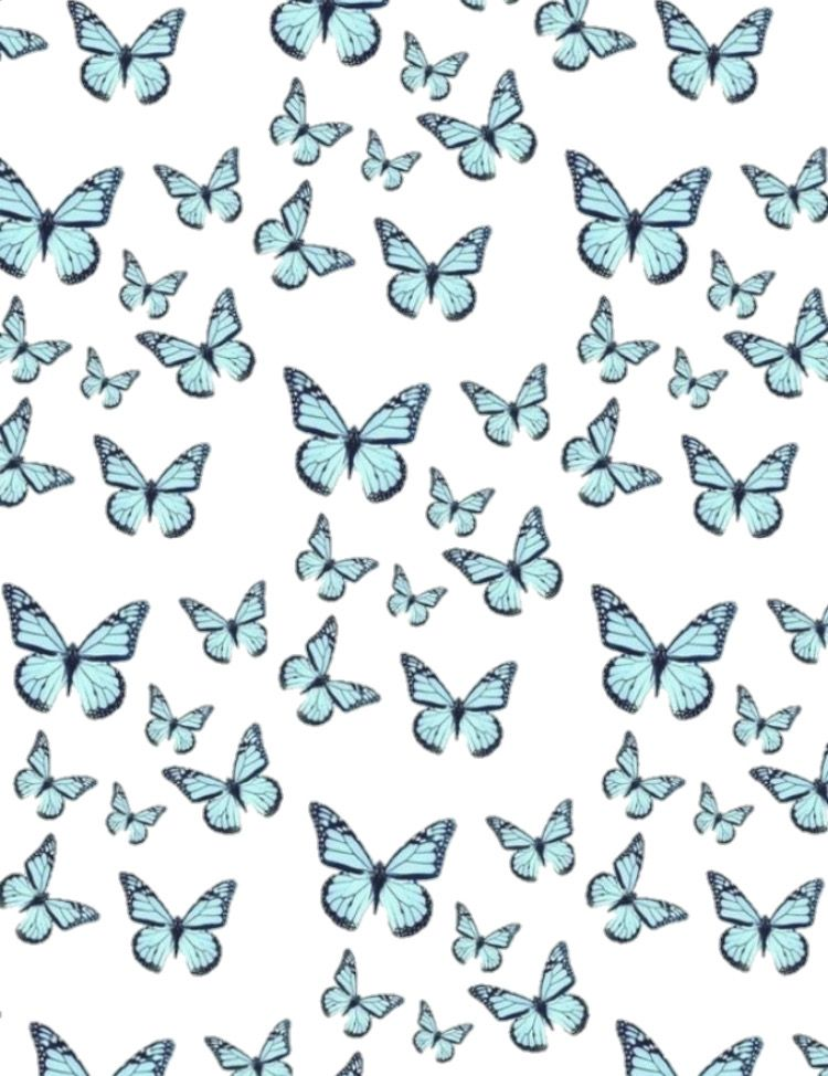 Cute Butterfly Blue And White Background Aesthetic Trendy Cool Wallpaper Blue Butterfly Wallpaper Baby Blue Aesthetic White Background Wallpaper Blue butterfly wallpaper aesthetic