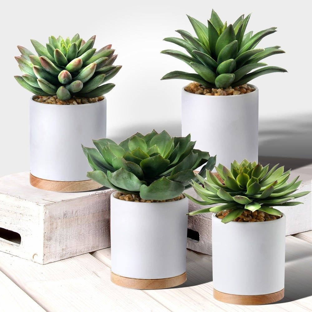 Overstock Com Online Shopping Bedding Furniture Electronics Jewelry Clothing More Succulents Succulent Pots Artificial Plants Decor