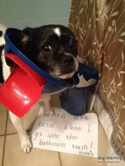 400 533 Cute Puppies And Kittens Dog Shaming Dogs