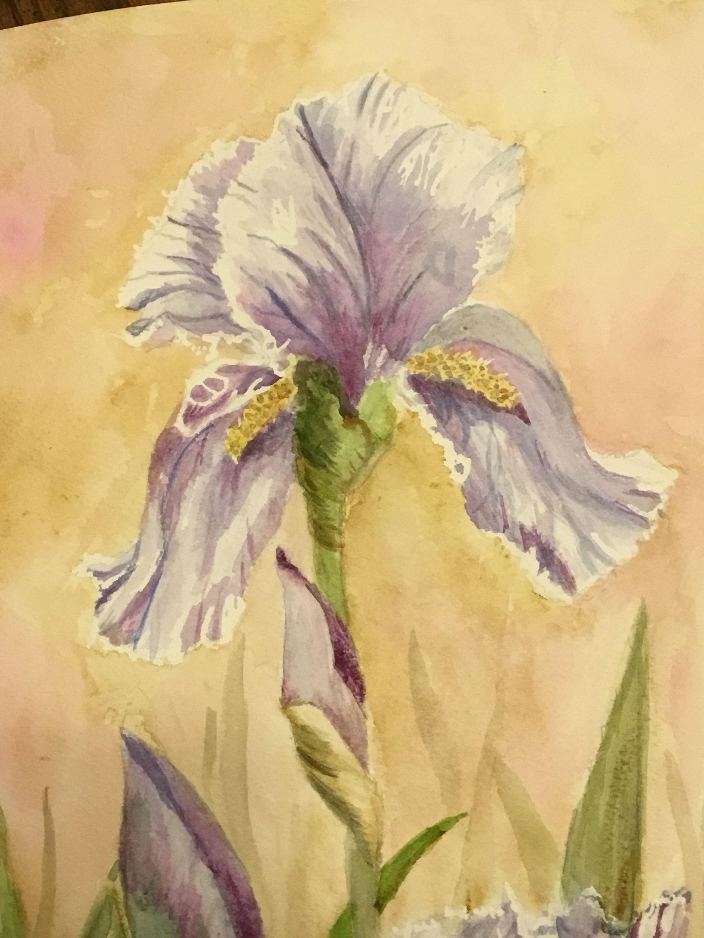 Purple Watercolor Iris Flower Painting By Joan Maney Iris