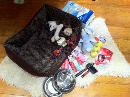 Must Have Supplies for a Puppy #newpuppy