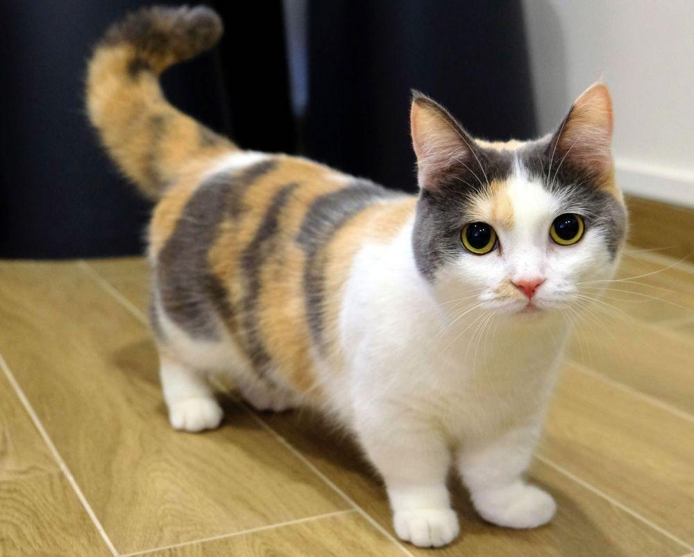 Pin Di Kucing Cantik