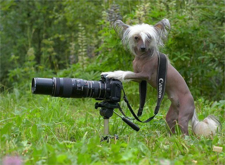 Смешно про фотографов картинки, сестре скорейшего