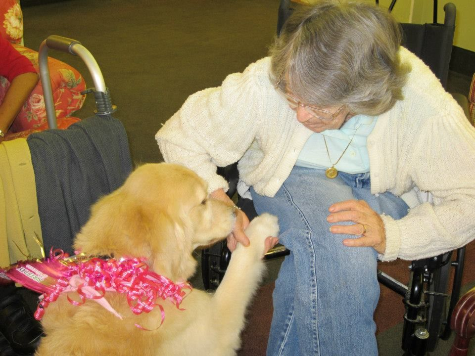 Happy Birthday To Our Therapy Dog Lily Thank You To Our Director