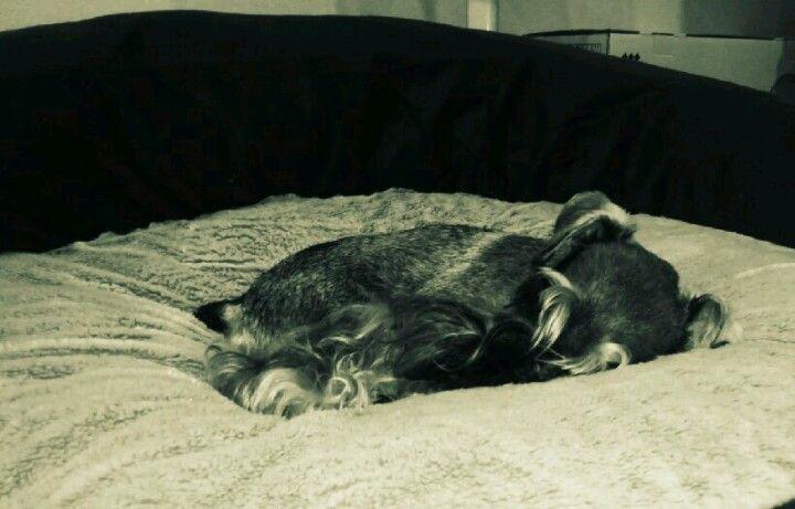 Sleep at big bed   -Yamato-