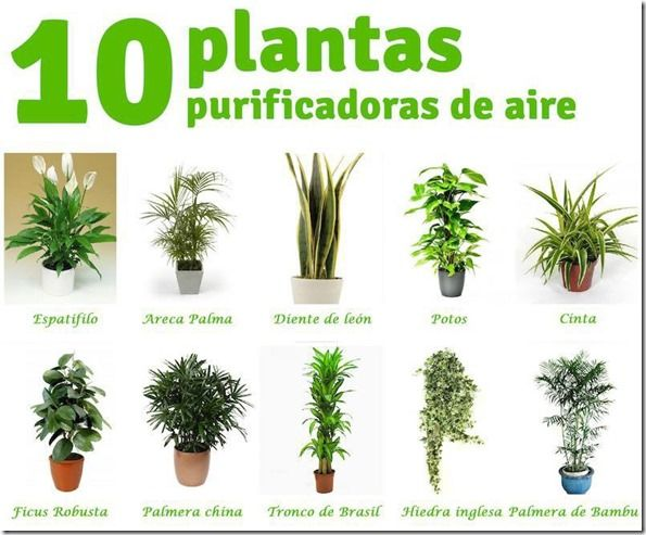 Best 25 plantas purificadoras de aire ideas on pinterest for Plantas ornamentales cuidados