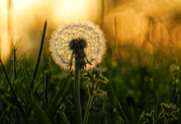 Las mejores Apps para alérgicos al polen