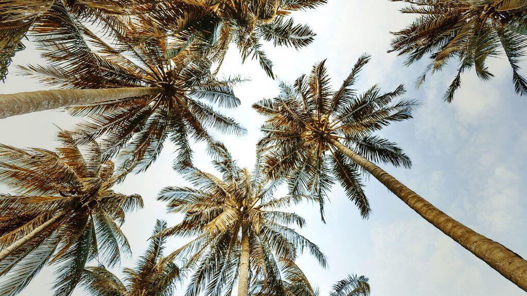 خلفيات صيفية لسطح المكتب نخيل Summer Desktop Wallpaper Palm Trees Cubist Artists Cubist Artist