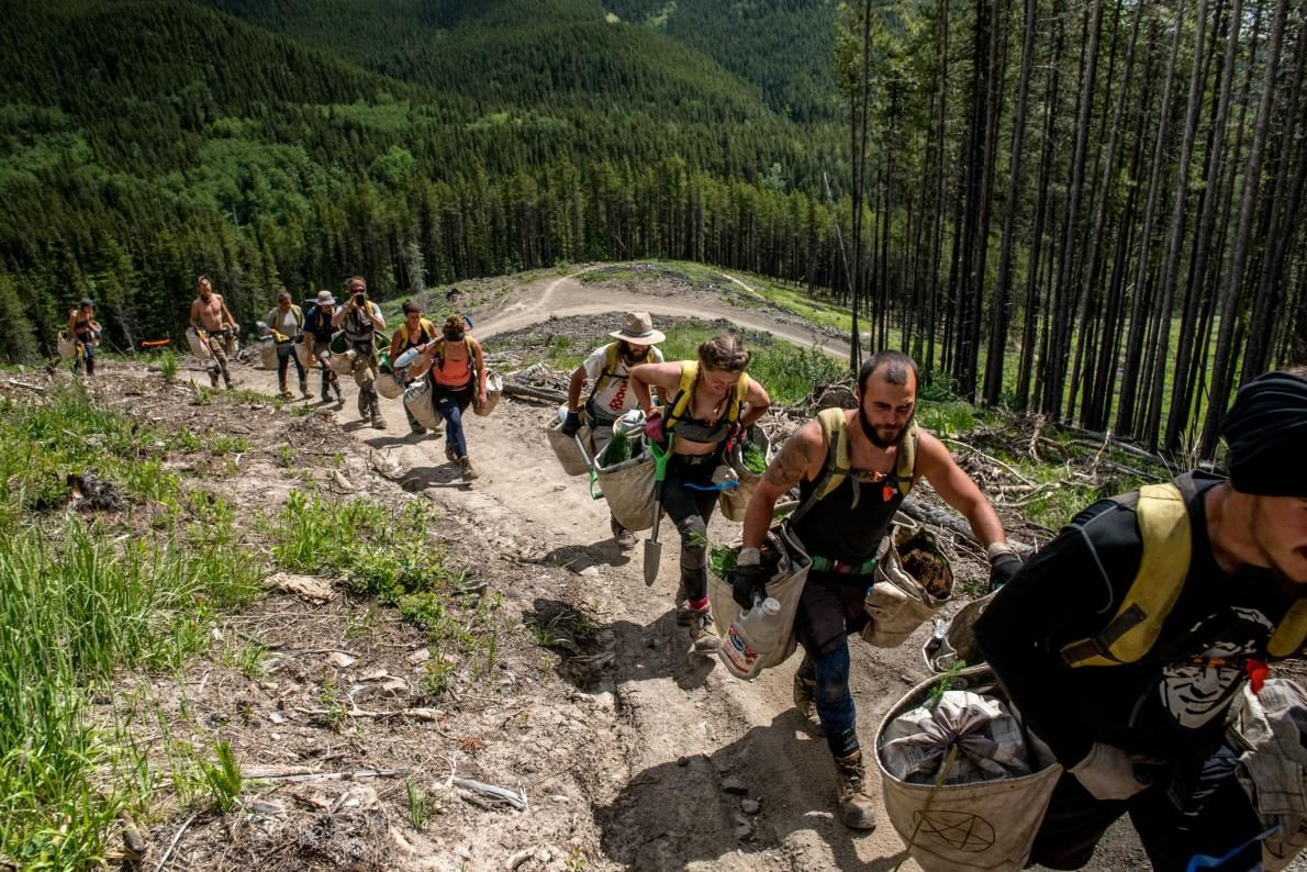 For cash and pride replanting canadas forests by the