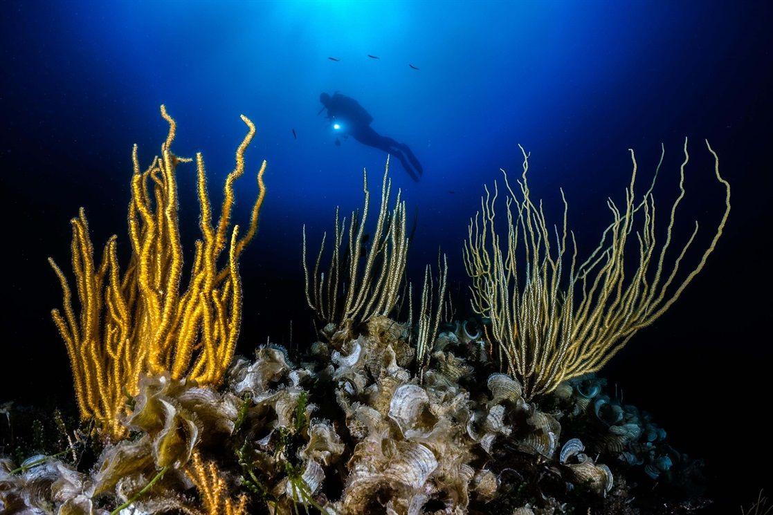 Meraviglie sott'acqua, ecco le più belle foto sottomarine - Wired | Oceano  illustrazioni, Foto, Belle foto